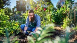 Cómo crear tu huerto urbano