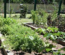 7 maneras para cultivar alimentos en tu jardín GRATIS