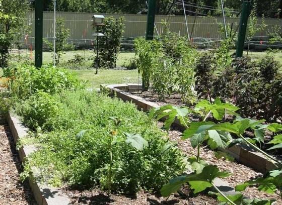 7 -maneras-sin-costo-cultivar-alimentos-jardín