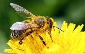 Pesticidas prohibidos por ser nocivos para las abejas