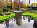 Los árboles de ciudad salvan al menos una vida cada año