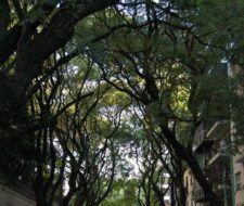 5 beneficios de los árboles urbanos