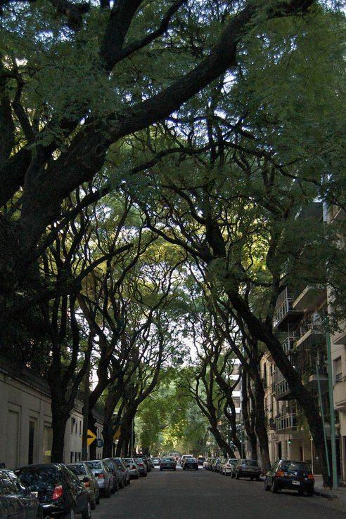 beneficios-arboles-urbanos