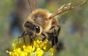 Erradicación de todas las abejas