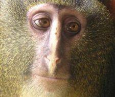 Top 10 de las especies más impactantes del mundo