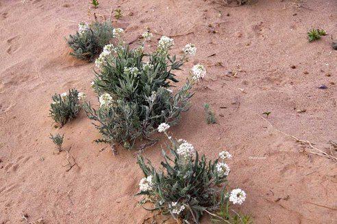 planta-desierto-verde