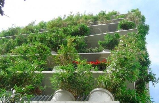 plantas-casa