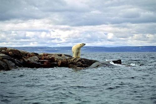 que-otros-efectos-pueden-esperarse-como-resultado-del-aumento-de-las-temperaturas-y-de-los-niveles-del-mar-extincion-de-los-osos-polares