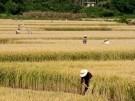 Los agricultores pueden combatir el cambio climático
