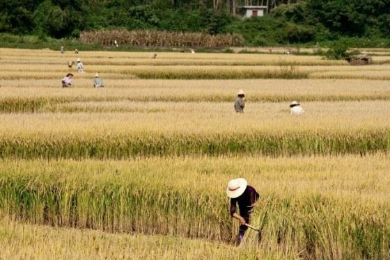 agricultores-cambio-climatico