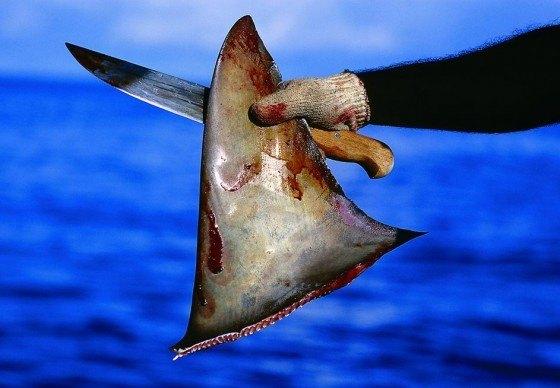 corte-aleta-tiburon