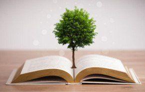 El proceso del papel o de cómo un árbol se vuelve papel