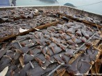 Videos sobre las crueldades de los pescadores cortando las aletas a los tiburones
