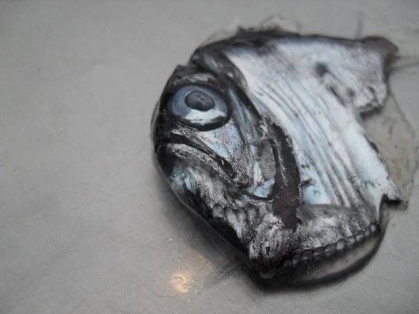 animales-raros-del-mundo-el-pez-hacha