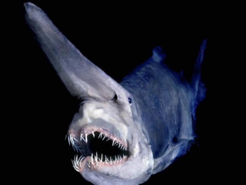 animales-raros-del-mundo-tiburón-de-mar