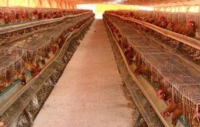 Maltrato animal, la otra cara de nuestra alimentación