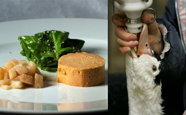 alimentacion forzada gansos foie gras