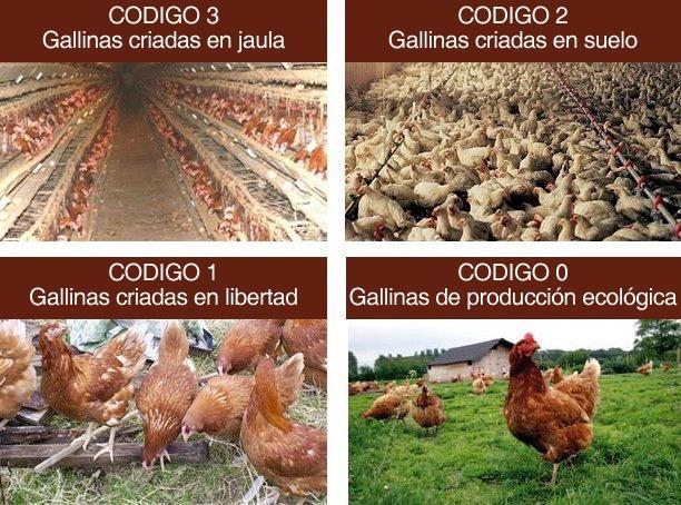 Maltrato animal la otra cara de nuestra alimentaci n for Cria de peces para consumo humano