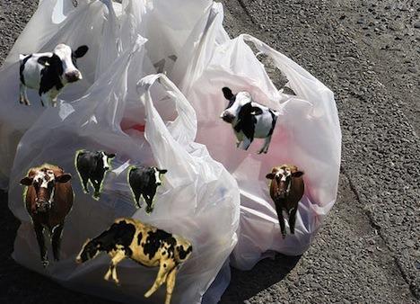 9-productos-que-utilizas-a-diario-y-que-no-sabes-que-contienen-ingredientes-animales-