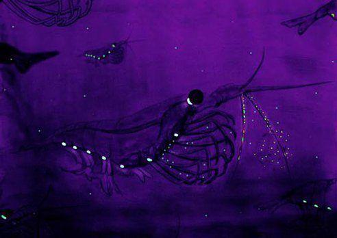 8-animales-que-brillan-en-la-oscuridad-criaturas-bioluminiscentes-krill