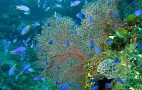 Clasificación de la biodiversidad