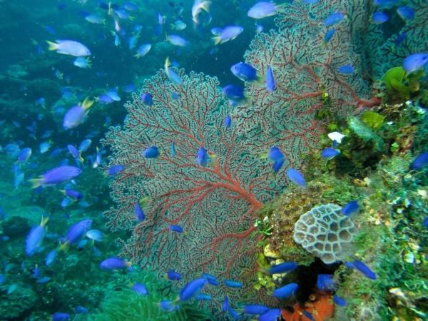 clasificacion-de-biodiversidad