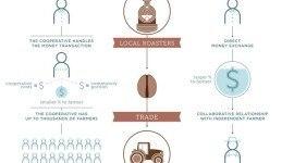¿Cómo diferenciar si un café es comercio directo o de comercio justo?