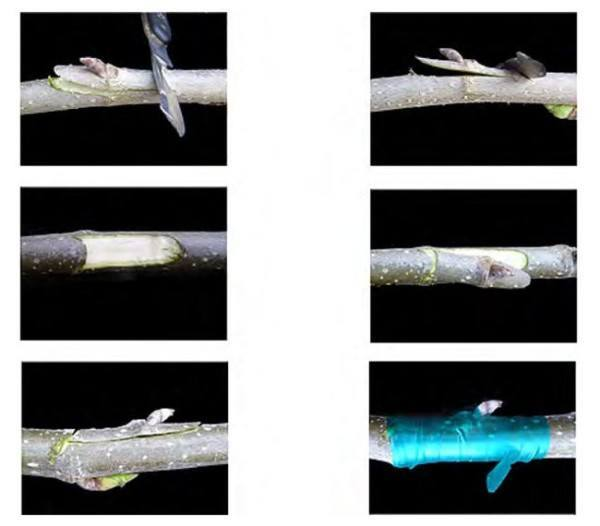 un-arbol-experimental-ha-sido-capaz-de-dar-40-tipos-diferentes-de-fruta-cultivo