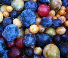 Un árbol experimental ha sido capaz de dar 40 tipos diferentes de fruta | Vídeo