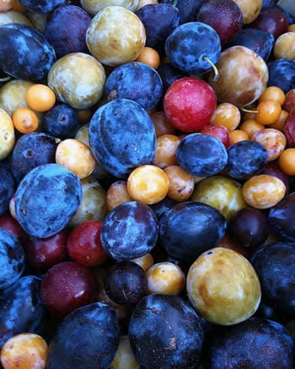 un-arbol-experimental-ha-sido-capaz-de-dar-40-tipos-diferentes-de-fruta-frutas