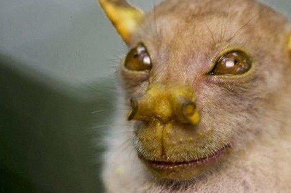 murciélago yoda