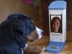 Una adolescente inventa un videochat para ver a su mascota y darle golosinas