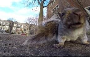 Esto es lo que pasa cuando una ardilla roba una cámara GoPro (vídeo)