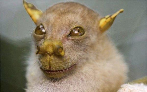 los-8-animales-mas-aterradores-del-mundo-murcielago-de-nariz-de-tubo