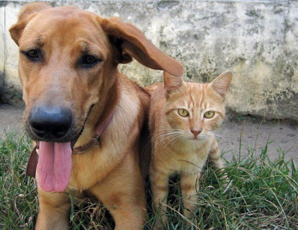 21-remedios-caseros-naturales-para-mascotas