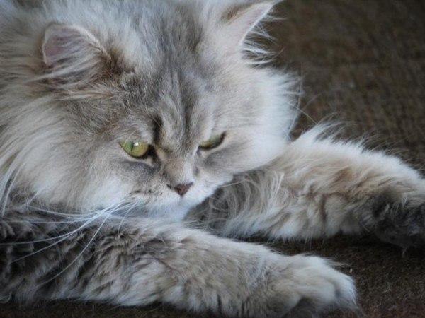 21-remedios-caseros-y-naturales-para-mascotas-bolas-de-pelo-mantequilla