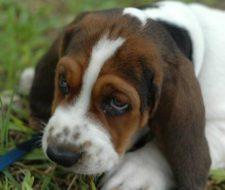 21 remedios caseros y naturales para mascotas