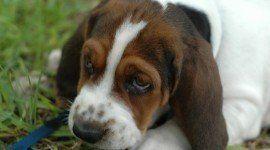 21 remedios caseros y naturales para cuidar a nuestras mascotas