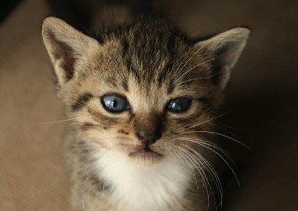 21-remedios-caseros-y-naturales-para-mascotas-ojos