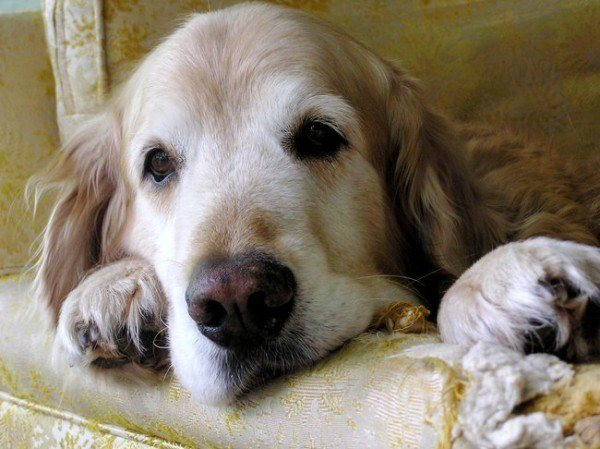 21-remedios-caseros-y-naturales-para-mascotas-problemas-estomago-calabaza
