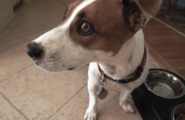 21-remedios-caseros-y-naturales-para-mascotas-problemas-faciales