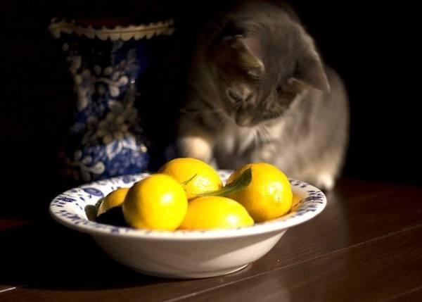 21-remedios-caseros-y-naturales-para-mascotas-pulgas-citricos