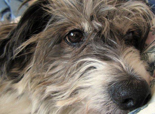 21-remedios-caseros-y-naturales-para-mascotas-rehidratacion