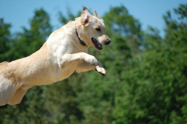 21-remedios-caseros-y-naturales-para-mascotas-sal-epsom