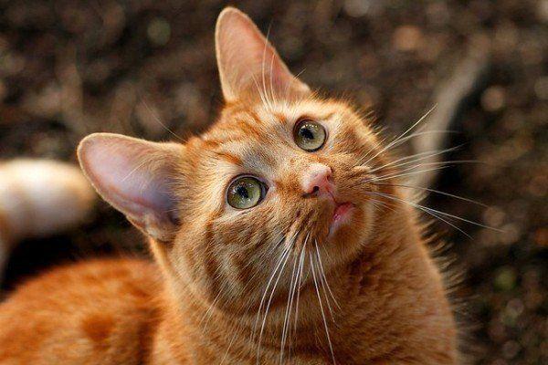 21-remedios-caseros-y-naturales-para-mascotas-spray-manzanilla