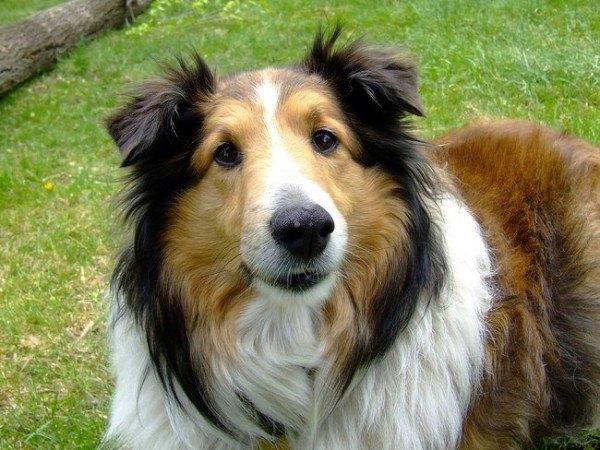 21-remedios-caseros-y-naturales-para-mascotas-vitamina-e