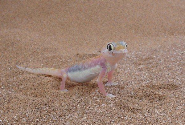 14-animales-de-color-rosa-que-te-van-a-sorprender-geco