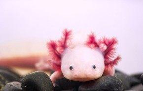 14 animales de color rosa que te van a sorprender