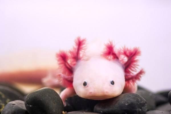 14-animales-de-color-rosa-que-te-van-sorprender
