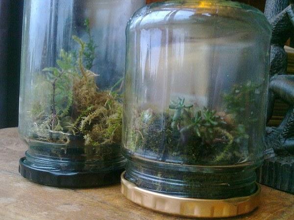 25-nuevos-usos-para-tarros-y-botes-viejos-reciclaje-hacer-un-pequeño-bosque